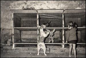 le chien et le Lapin